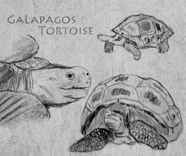 Anatomy of a tortoise